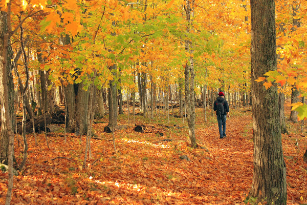 Man walking in Father Hennepin State Park amidst colorful fall trees