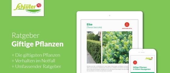 Giftige Pflanzen - Informieren Sie Ihre Vereinsmitglieder, Eltern und Kinder!
