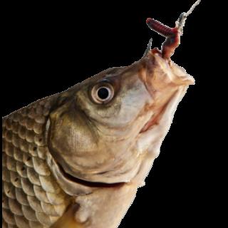 Наживка для рыбной ловли