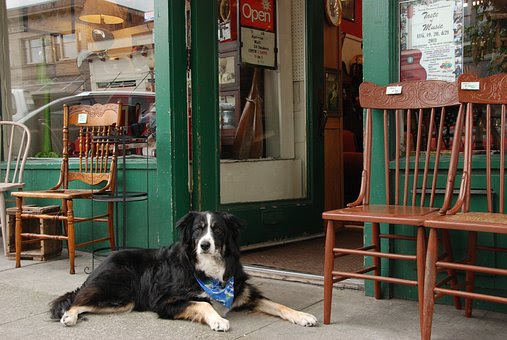 Dog training in front of a store