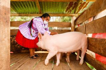 660 productores de Cajamarca se gradúan como expertos en buenas prácticas agrícolas y pecuarias