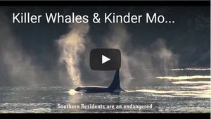 Raincoast's Killer Whale video