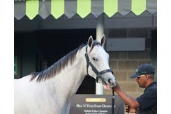The Tapit colt consigned as Hip 135 by Hill 'n' Dale Sales Agency to the Keeneland September Sale
