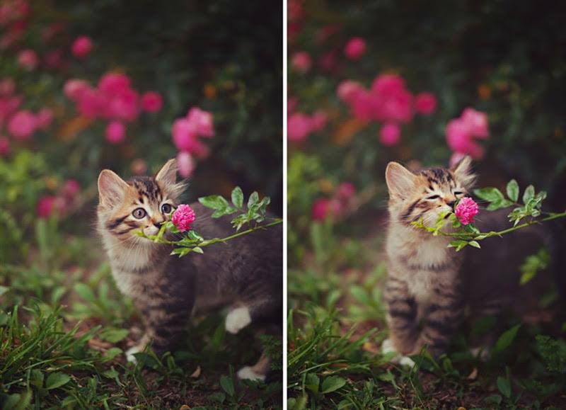 nimals пахнущие цветы