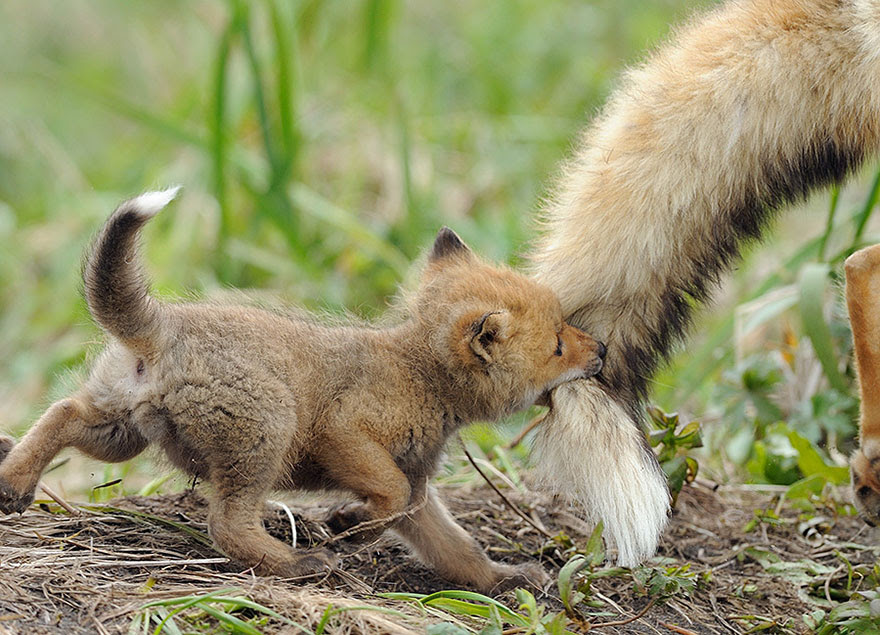 http://www.boredpanda.com/cute-animal-parenting/?image_id=animal-parents-7.jpg