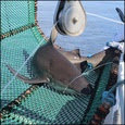 Gulf Shark Survey square