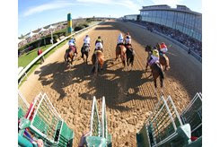 AND THEY'RE OFF: The field for the first division of the March 16 Rebel Stakes races their shadows as fans enjoy an exciting raceday at Oaklawn Park