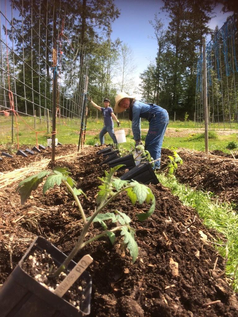 Blog | Ananda Farm Camano Island | Farming with Spirit