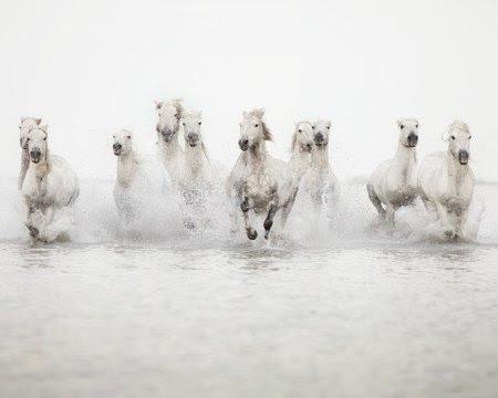 White horses water