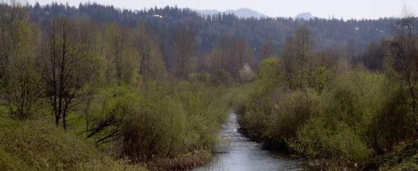 Sammamish River Transition Zone