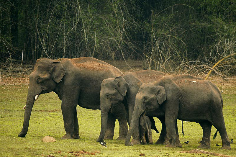 File:2010-kabini-elephant-family.jpg