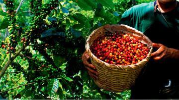Retos de la caficultura nacional: Mejoras tecnológicas y servicios para productores