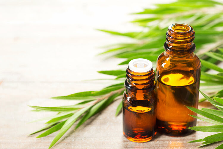 Benefits of Tea Tree Essential Oil for Skin, Hair and Health