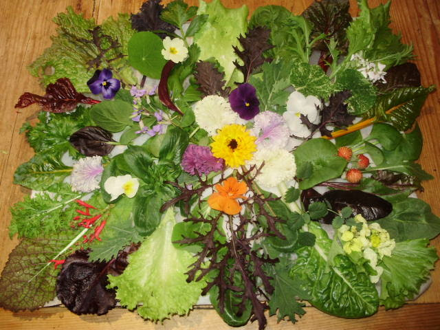 The selection of winter salads available on New Year's Day is a cheerful sight