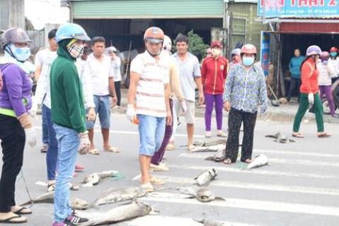 Người dân mang xác cá chết đổ ra quốc lộ, đường đi Vũng Tàu tắc nghẽn - ảnh 5