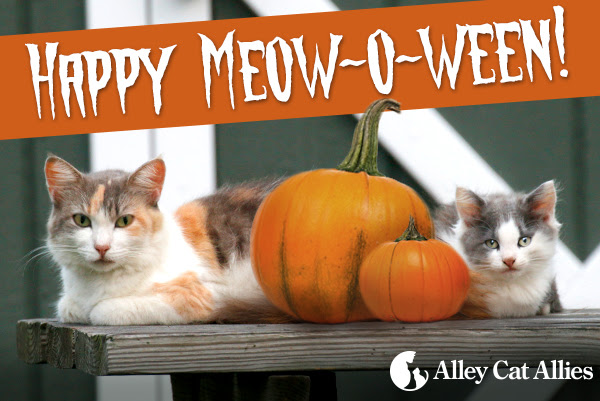 Happy Meow-o-ween!
