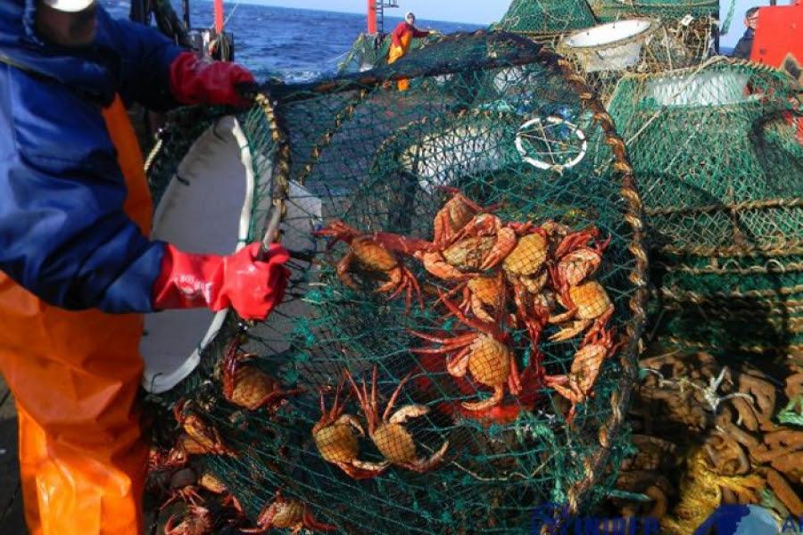 Cangrejo rojo: casi tres décadas después se logra convenio colectivo