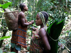 The Baka have lived sustainably in the central African rainforest for generations as hunter-gatherers