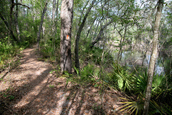 Florida National Scenic Trail near White Springs by Doug Alderson