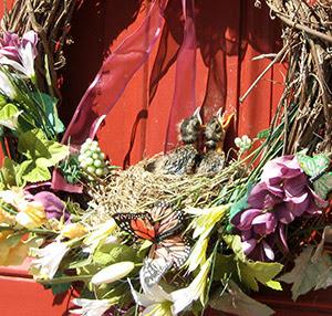 Robin nestlings in door wreath