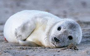 Fluffy Cotton Wool Seals