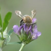cropped-male-lucerne-close-up.jpg?w=200