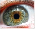 Immune cells can repopulate in the retina after elimination, mice study shows