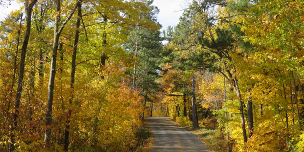 image of fall color at Lake Itasca State Park