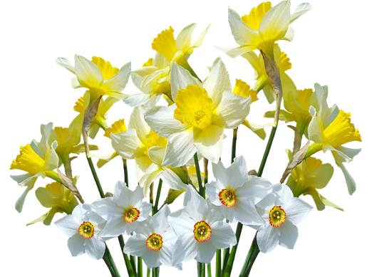 A group of white flowers  Description automatically generated with medium confidence