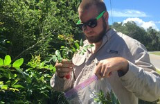 Florida Conservation Corps member Caleb Garner bags a Brazilian pepper tree cutting.