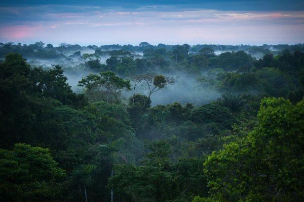 The Amazon rainforest Credit Brazilian Things