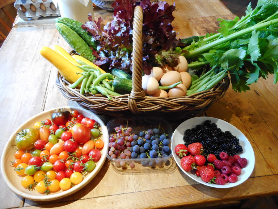 A small selection of just some of the produce currently available from the polytunnel.  It's a sumptuous feast for the eyes, the body and the brain!