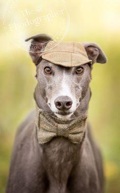 77 Best Sherlock images in 2020 | Sherlock holmes, Sherlock, Holmes
