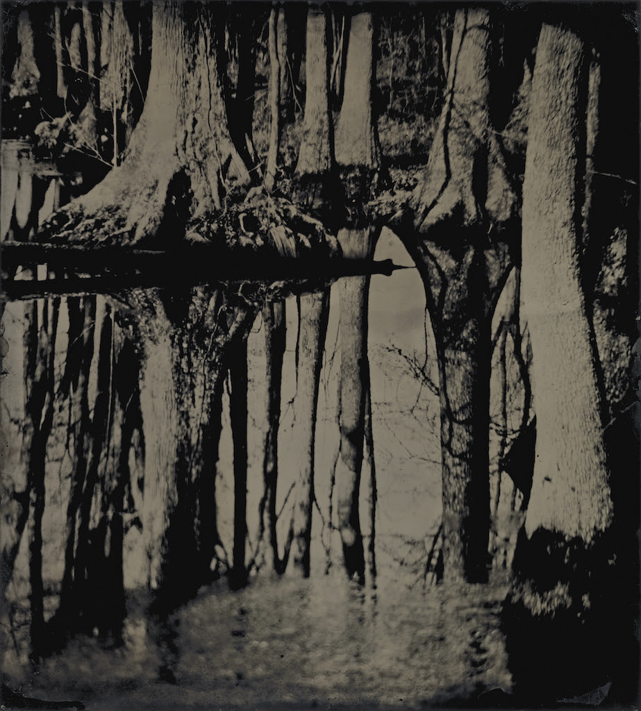 Sally Mann (American, born 1951) Blackwater 25, 2008-2012, Tintype, Collection of the artist. Image © Sally Mann