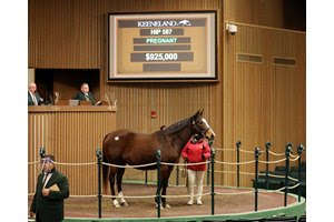 Danceforthecause sells in the ring for $925,000 during the second session of the Keeneland January Sale