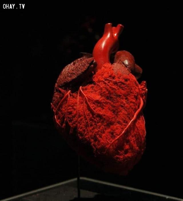 Hệ thống truyền máu của cơ tim,cơ thể con người
