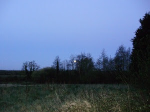 Full moon setting - looking south west over the meadow at dawn