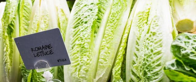 Lechugas romanas retiradas del mercado por brote de E. coli. Infórmese sobre E. coli.