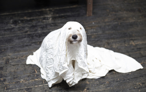 A dog dressed up as a ghost.
