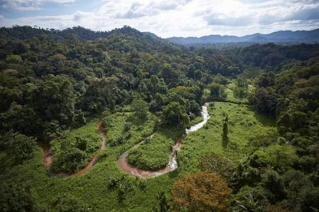 The dense jungle of Honduras. Photograph: Dave Yoder/National Geographic