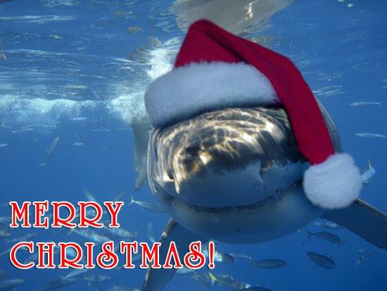 shark wearing a santa hat