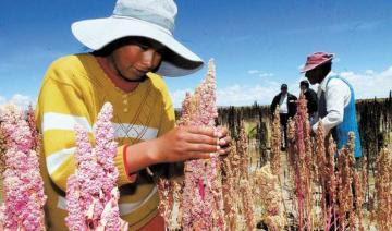 Más de 125.000 familias agrarias en Perú se dedican al cultivo de granos andinos
