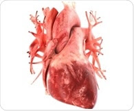 New marker involved in lymphatic system linked to increased risk of heart failure