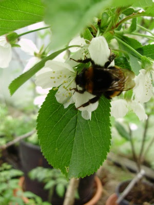 1. Bee clinging to cherry blossom in tunnel