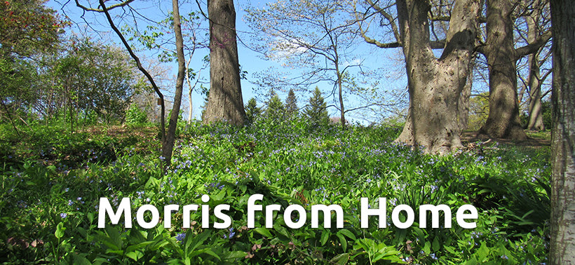 Morris from Home