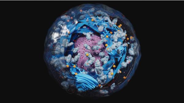 Célula con sus mitocondrias