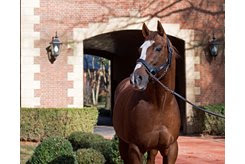 Kitten's Joy is one sire whose shift to a different stud fee range influenced an increase in that fee range's percentage of average mares bred between 2016-18.