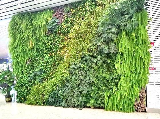 Fern wall at Guangzhou airport China (PANAYOTI KELAIDIS photo)