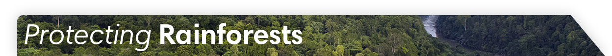 Protect Rainforests - Donate Now!