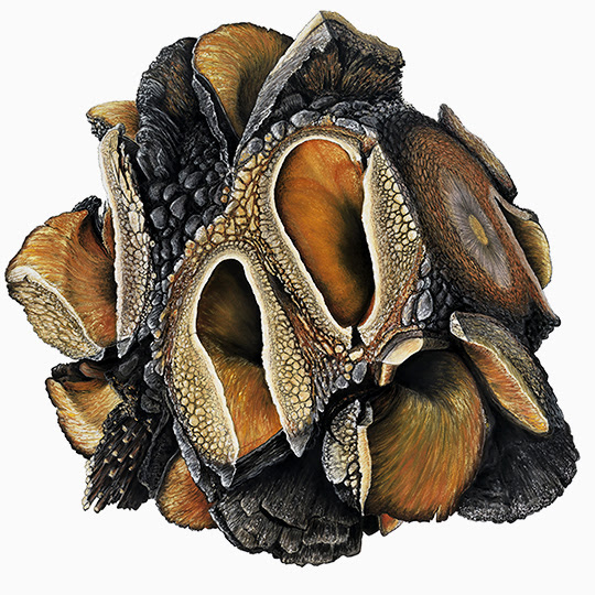 Augmented Study - Banksia by Oliver Ashworth-Martin